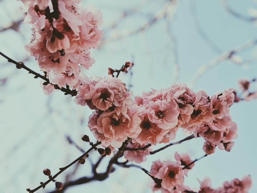 Celulitis en primavera